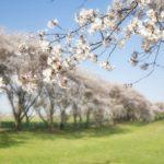 桜を見る会の時間検証43件は49件が正しい?謎6件どこ行った?