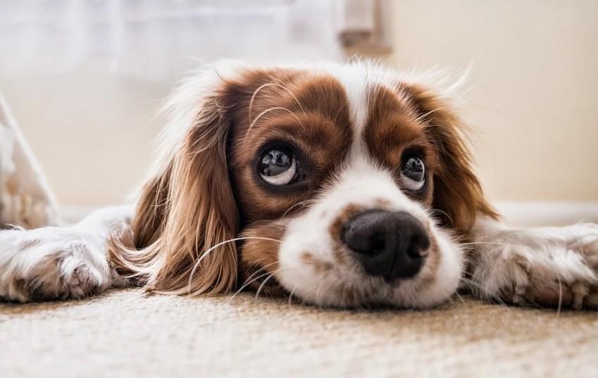 レンタル犬・わん泊ランドの評判や口コミは?批判される理由とは
